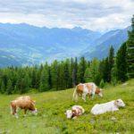 Ein Wochenende in Gastein: Wandern, Therme & Kulinarik