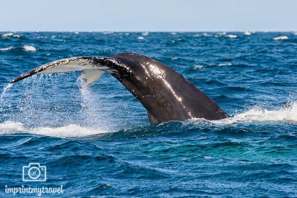 Island Rundreise Walbeobachtung in Húsavik