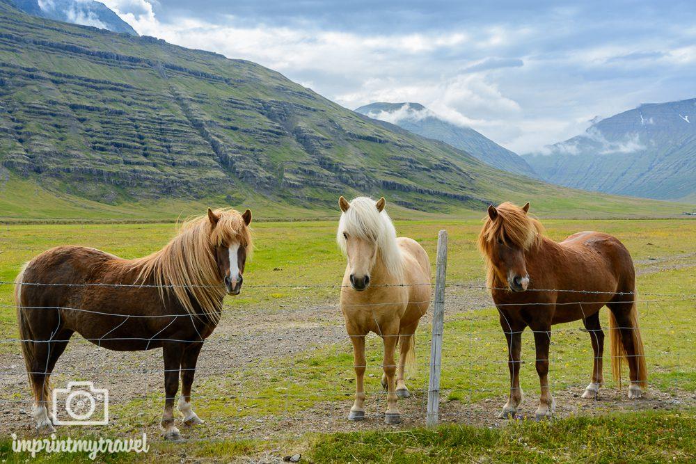 Island Bilder Island Ponies