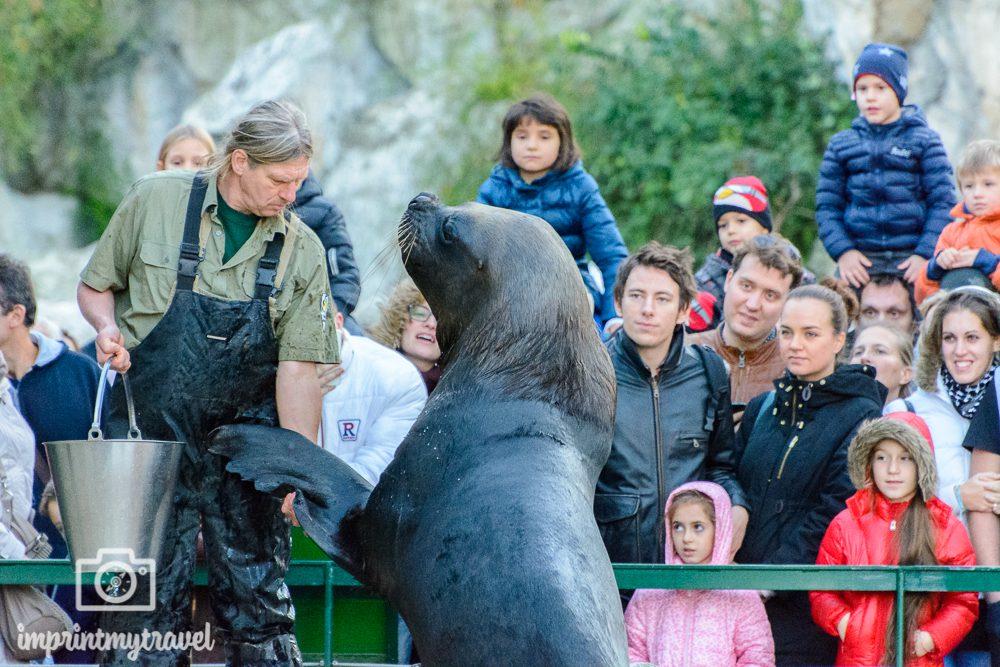 Heimatliebe Wien Schoenbrunn Zoo
