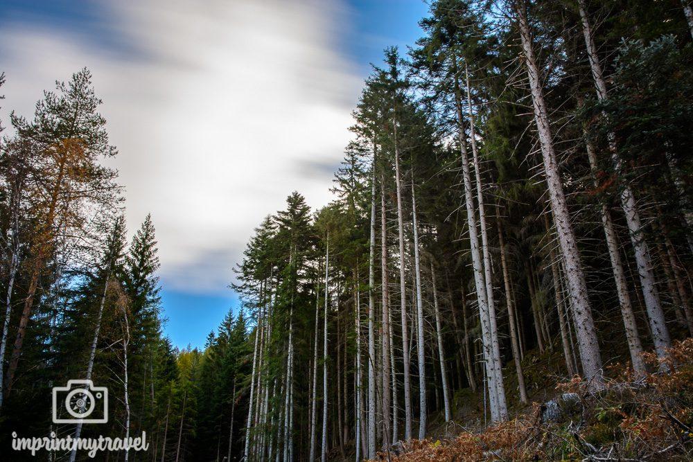 Wandern in Südtirol Langzeitbelichtung Wald