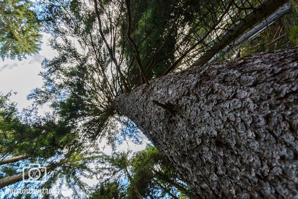 Wandern in Südtirol Baum