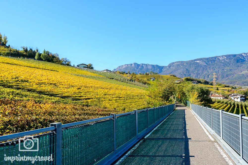 Radfahren durch die Weinberge in Südtirol