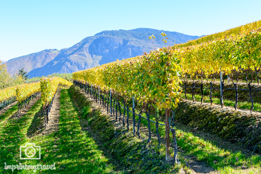 Wandern in Südtirol Weinberge