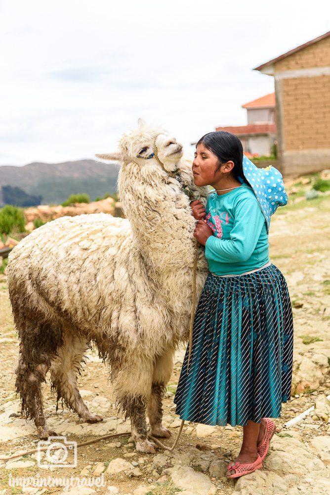 Bolivien Bilder Alpaka