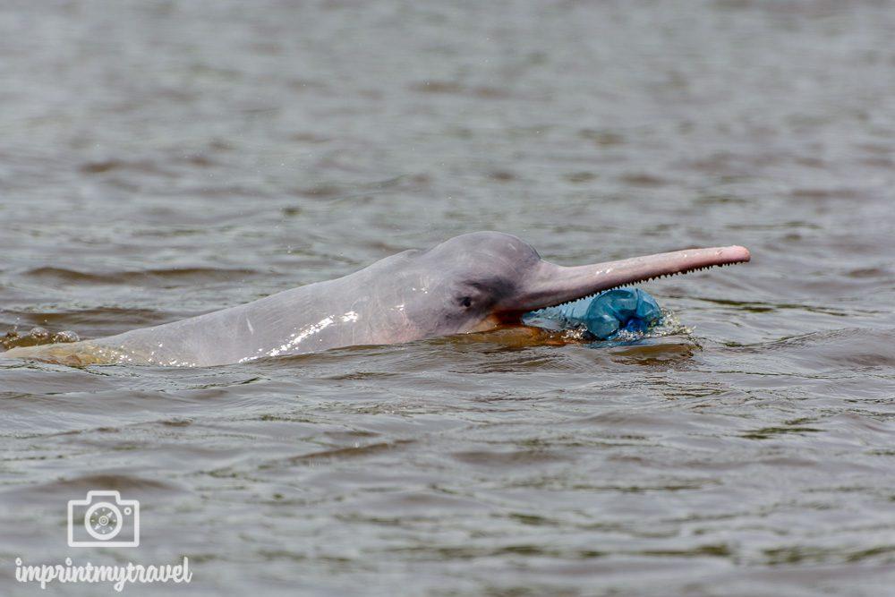 Sehenswürdigkeiten Südamerika Flussdelfin