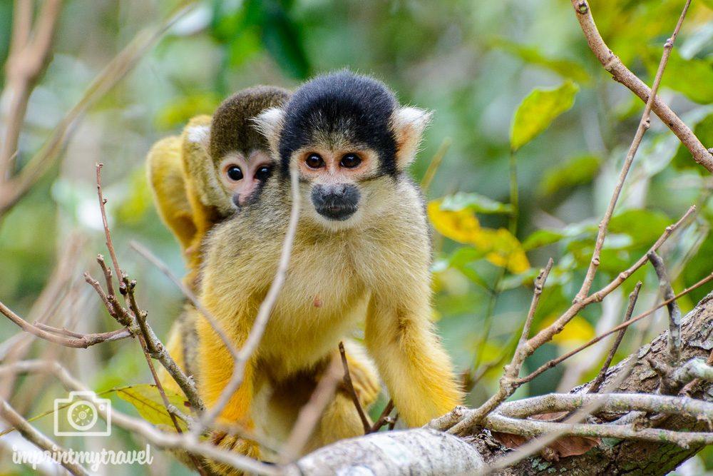 Südamerika Sehenswürdigkeiten Amazonas