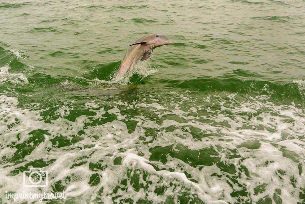 Rundreise Südwest Florida Delfin