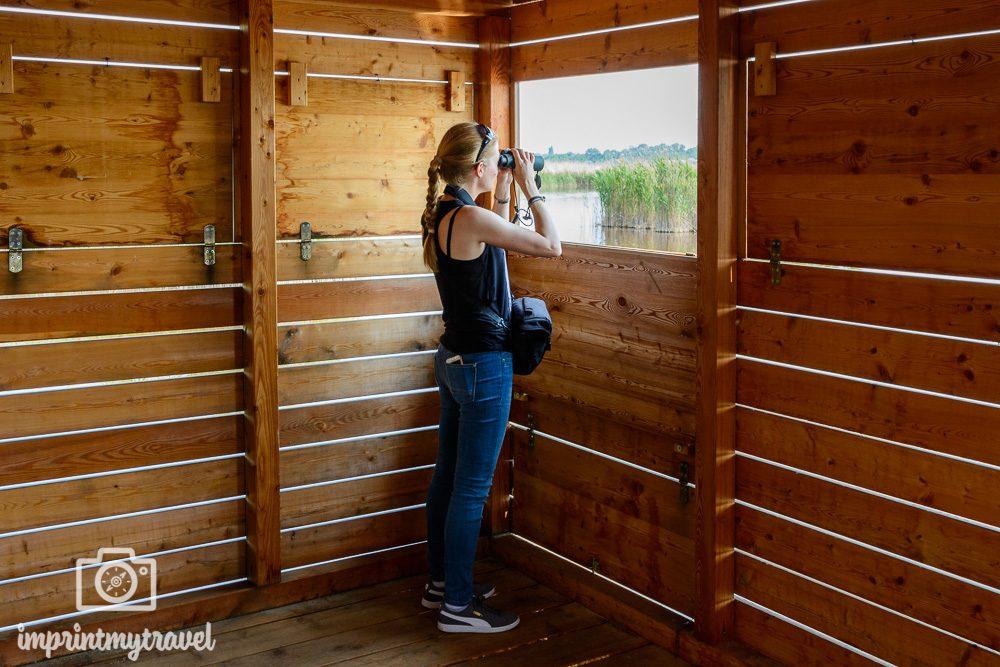 Ausflugsziel Nationalpark Neusiedlersee Vogelbeobachtung