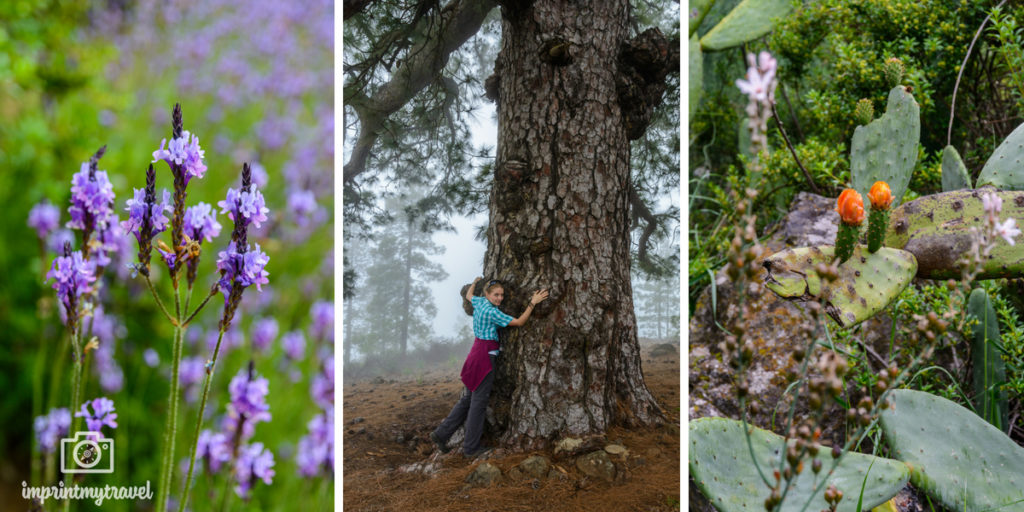 Wandern auf Teneriffa Flora