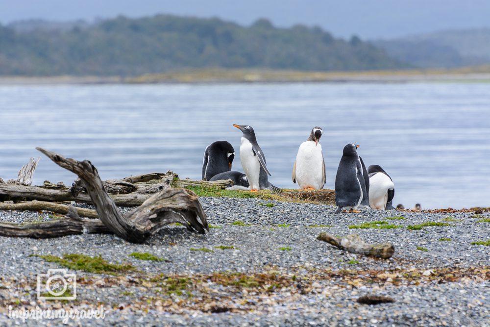 Fotoreise Patagonien Pinguine