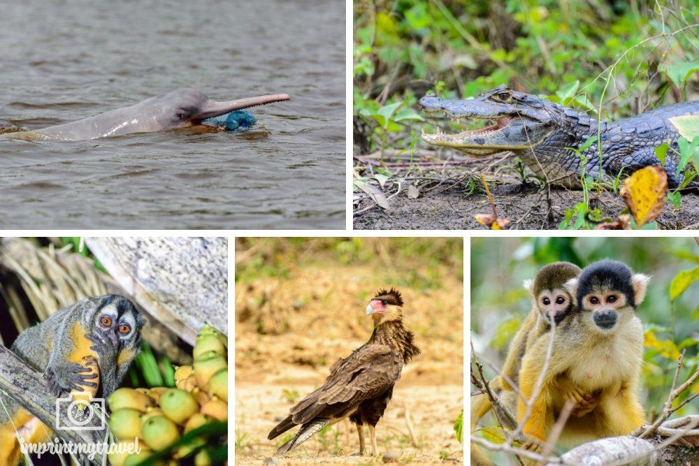 Bolivien Sehenswürdigkeiten Amazonas Tierwelt