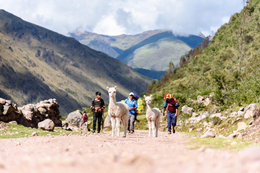 Lares Trekking nach Machu Picchu Eindrücke