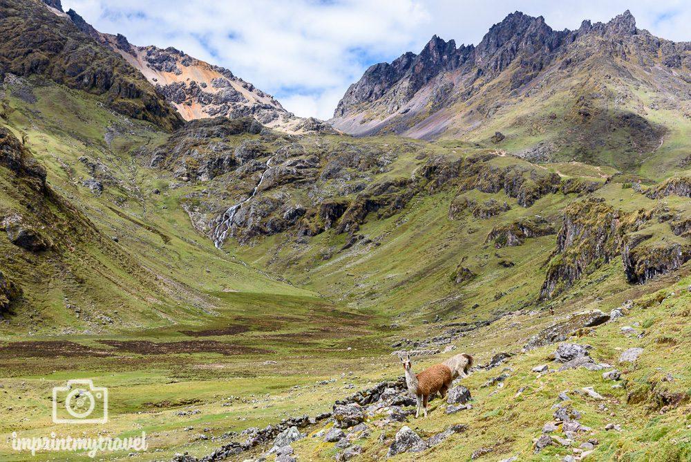 Lares Trekking nach Machu Picchu