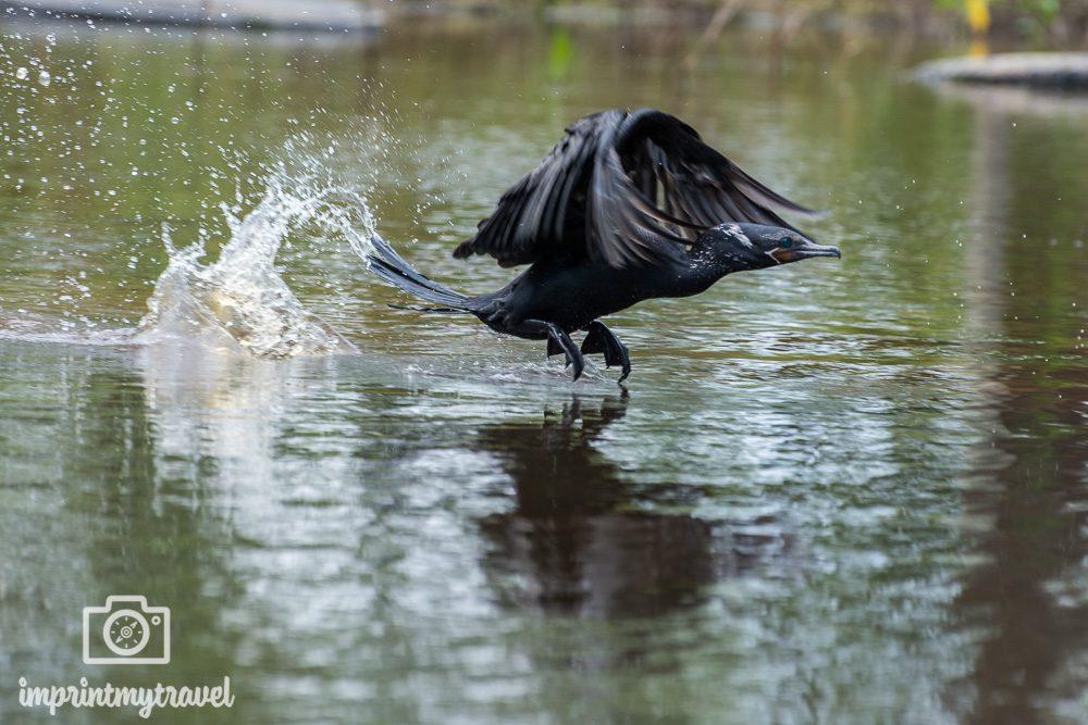 Unscharfe Fotos Tiere in Bewegung