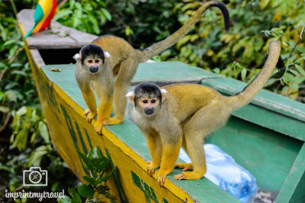 Bolivien Sehenswürdigkeiten Amazonas