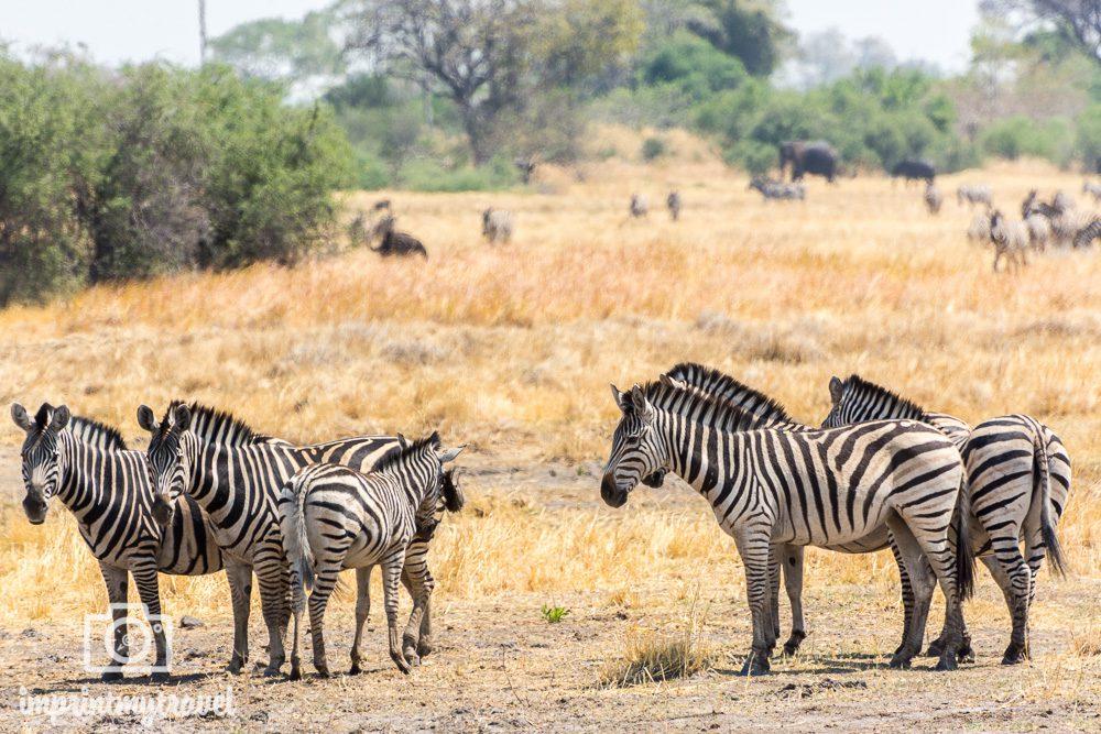 Safari in Botswana Moremi Trockenzeit