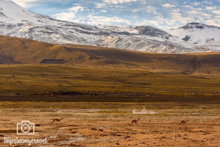 San Pedro de Atacama Sehenswürdigkeiten