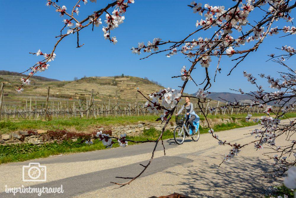 Wachau erleben mit dem Rad