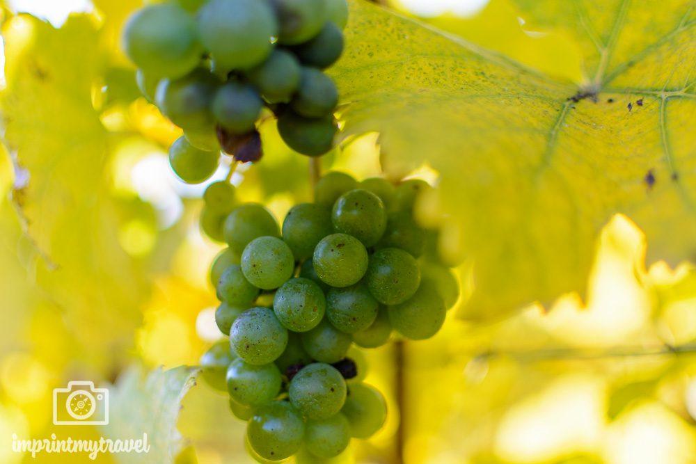 Wachau Weinbau