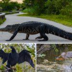 Der Everglades Nationalpark in Florida