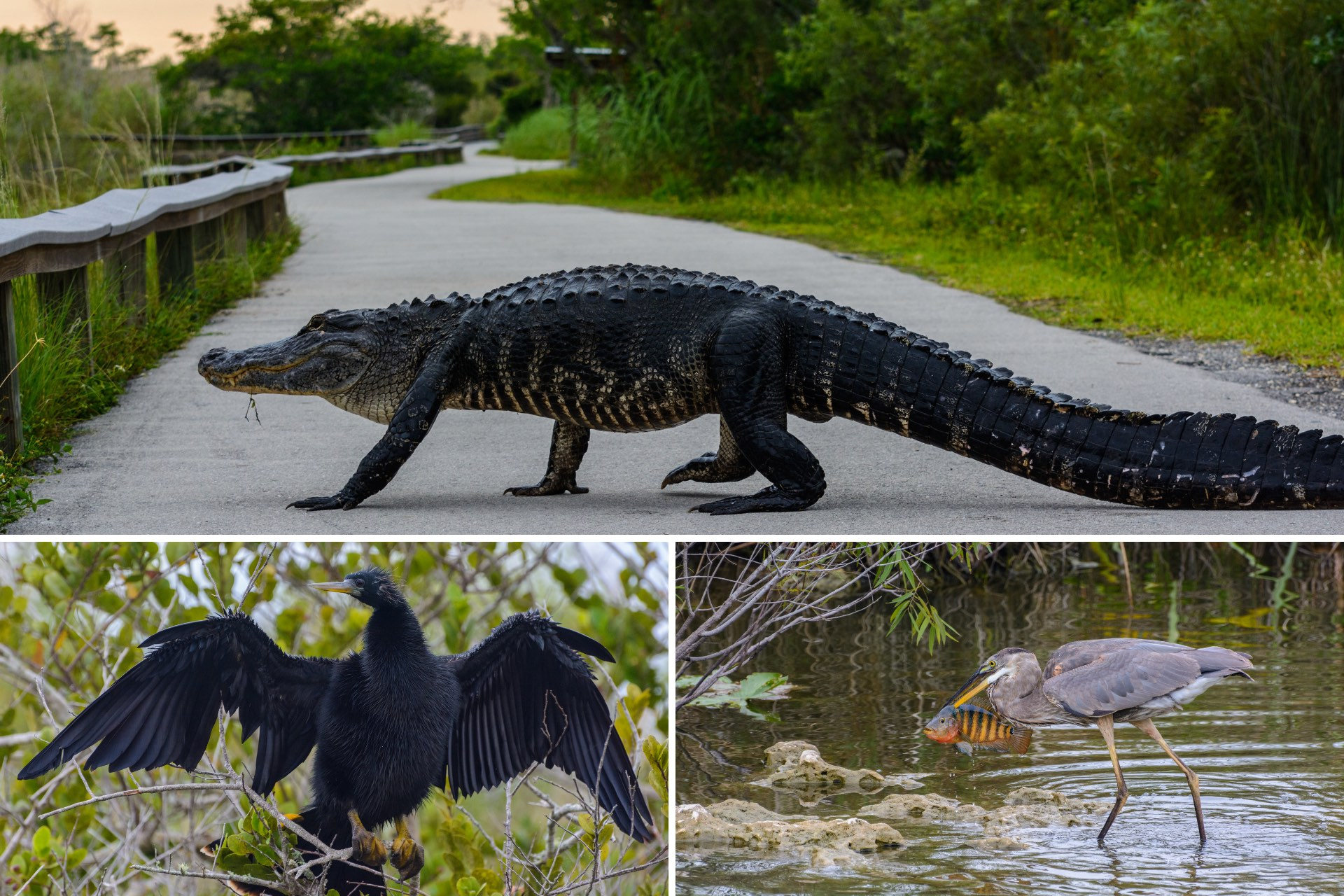 Der Everglades Nationalpark in Florida
