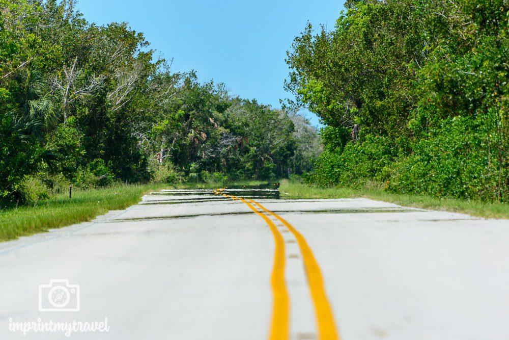 Straße nach Flamingo