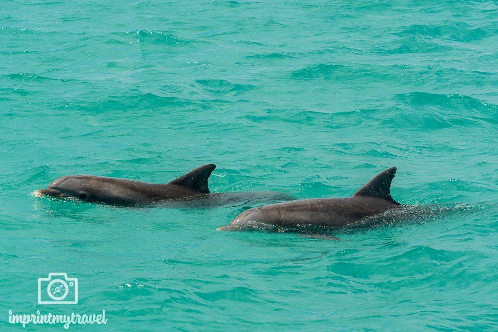 Key West Ausflüge Delfine