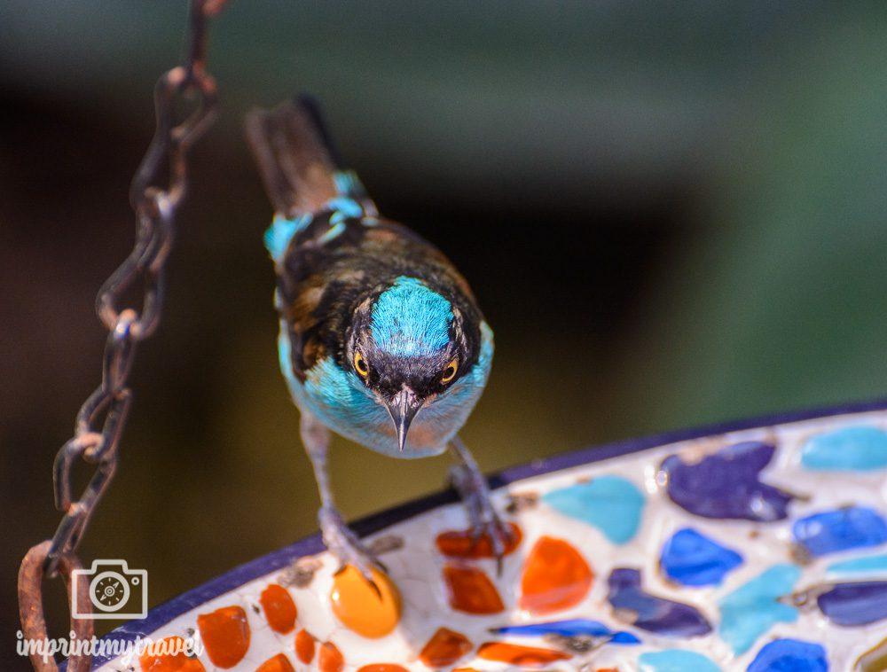 Key West Schmetterlingshaus