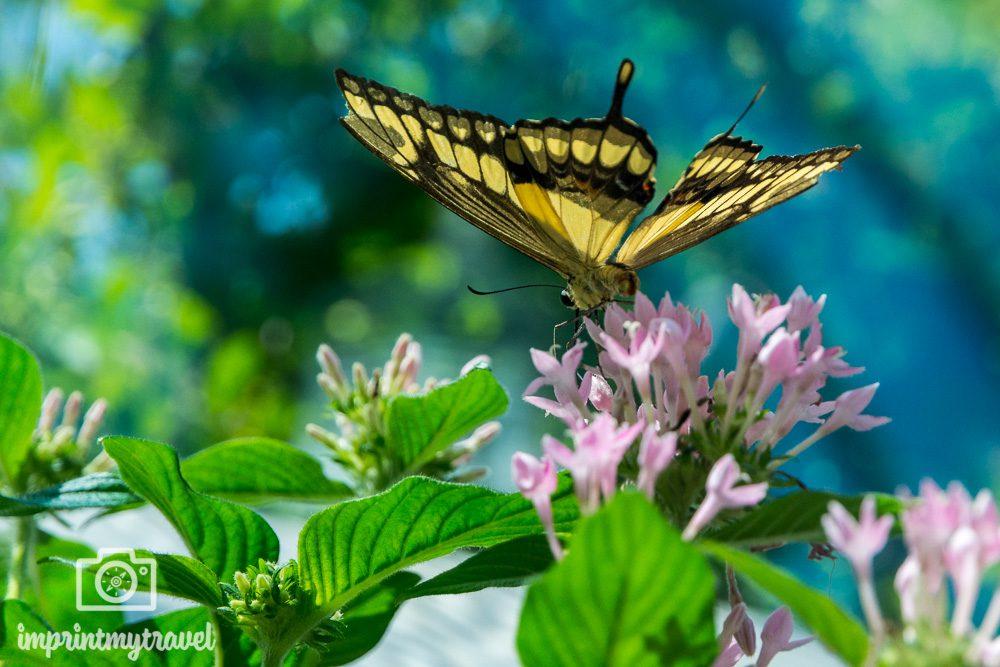 Key west Sehenswürdigkeiten Butterfly Conservatory