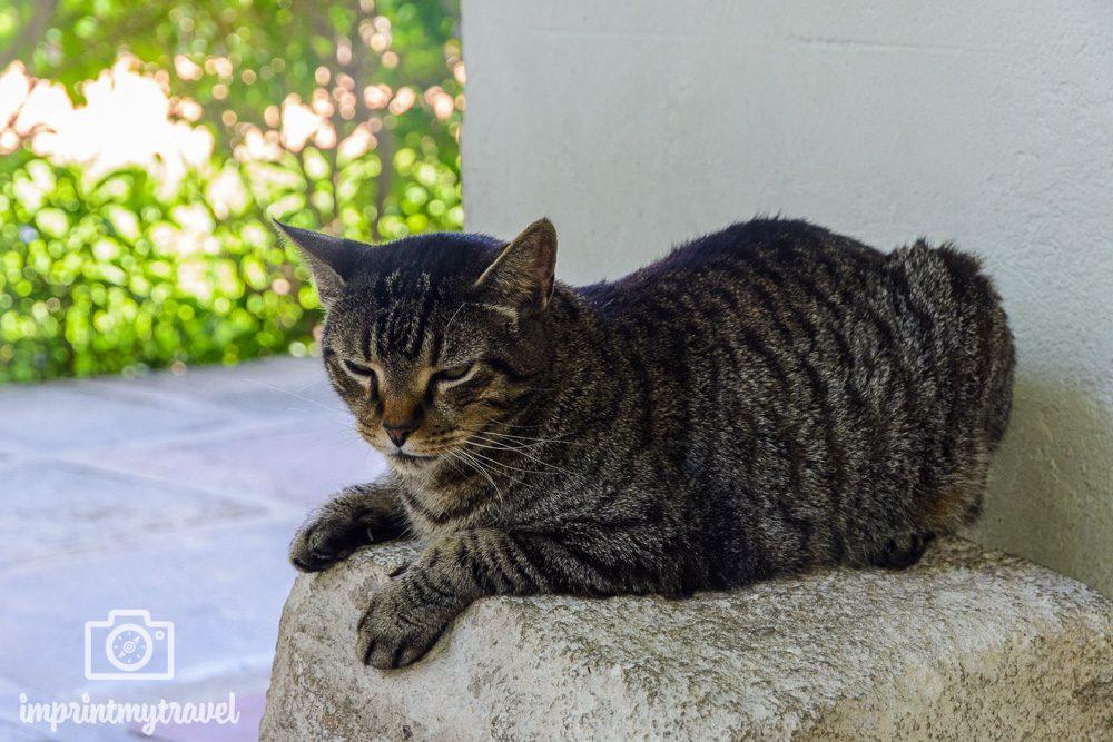 Key West Hemingway Katzen