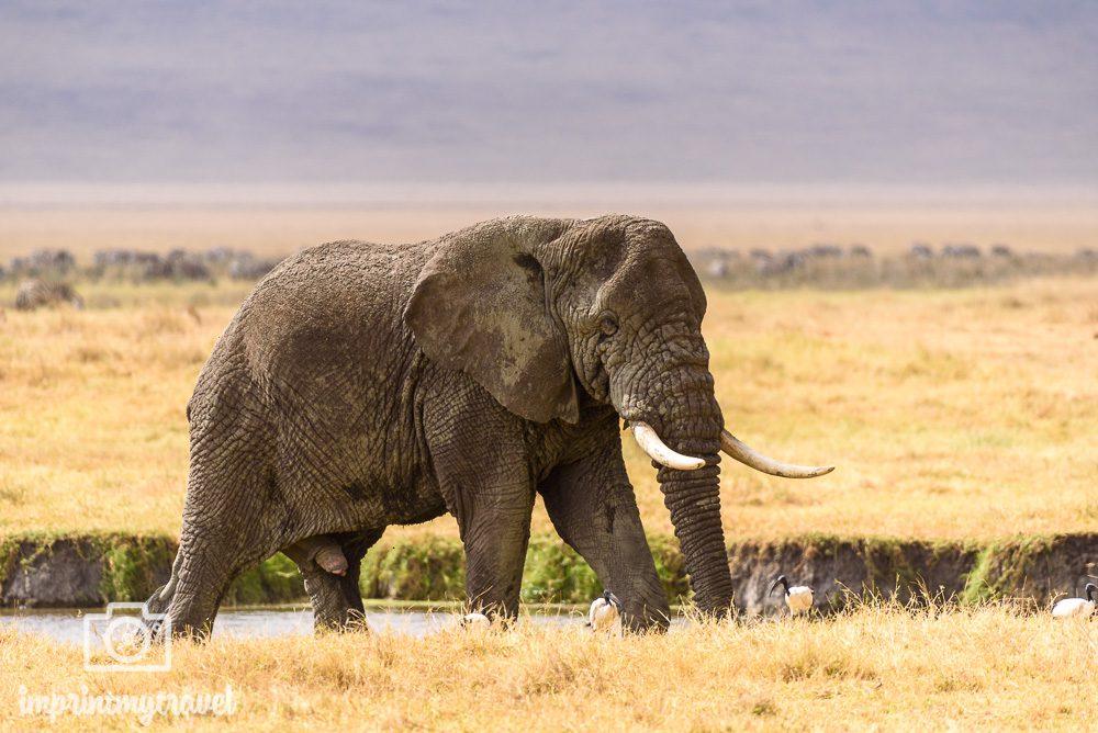 Fotoreise Tansania Ngorongoro Krater