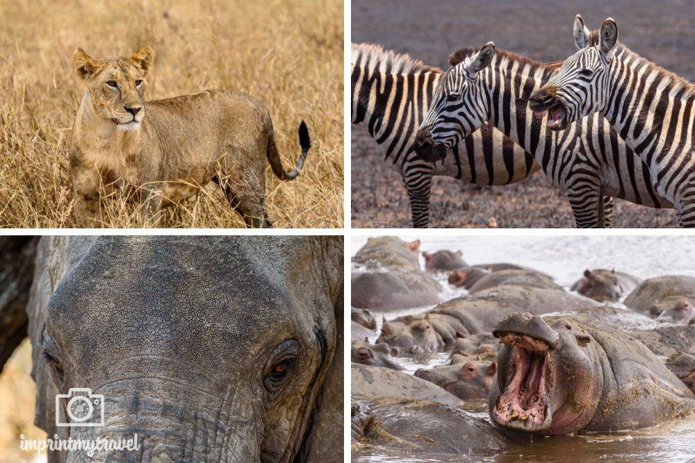 Tansania Fotoreise Einblick