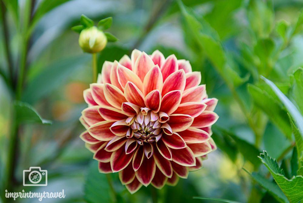 Fotoparade 2019: Pflanzen (Giverny Garten)