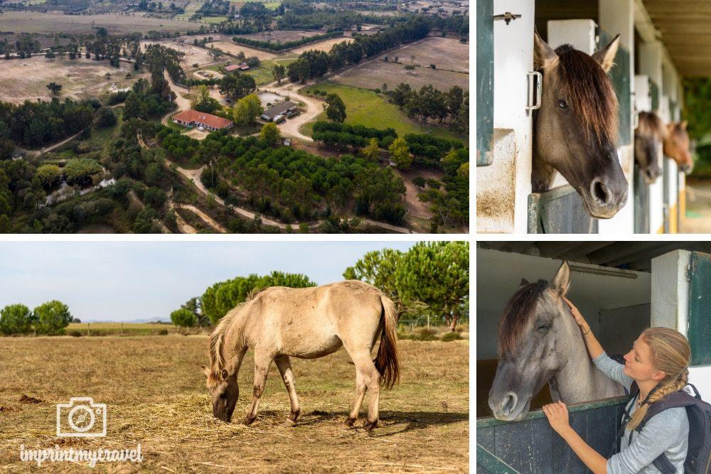 Portugal Alentejo Sorraia Pferde