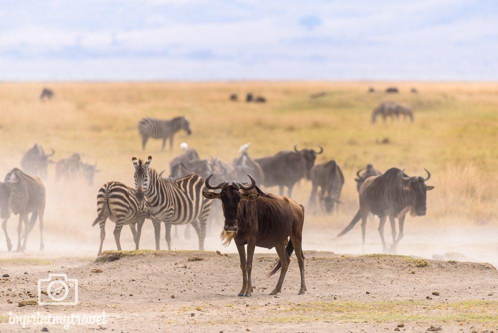 Tansania Safari Tipps Trockenzeit September