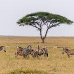 Die schönsten Nationalparks in Tansanias Norden