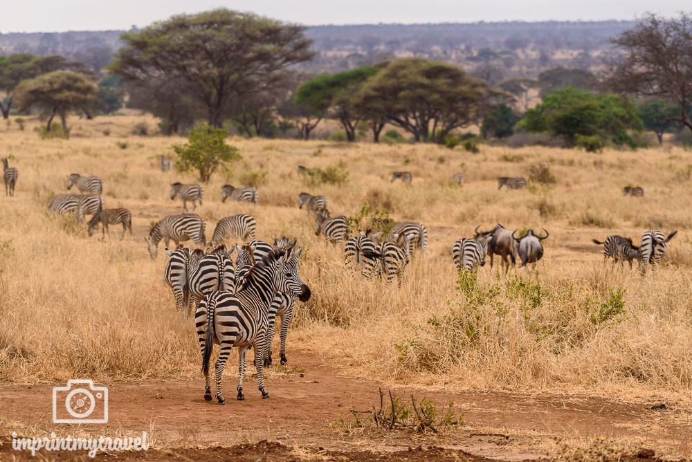 Tansania Safari Tipps