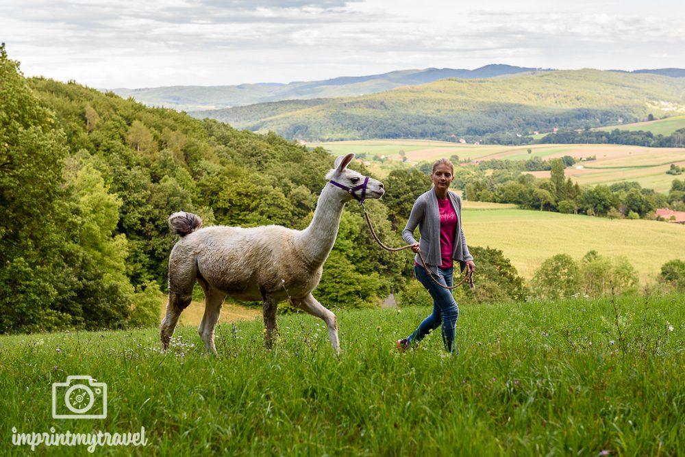 Niederösterreich Ausflugstipp Lama-Wanderung