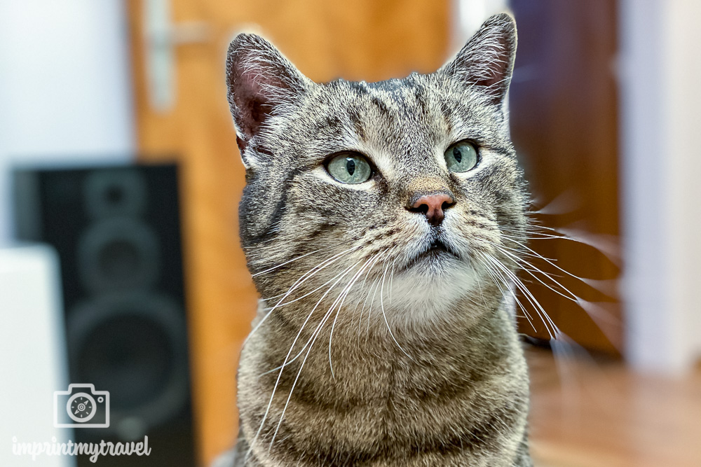 iPhone 11 Pro Kamera Test Katze