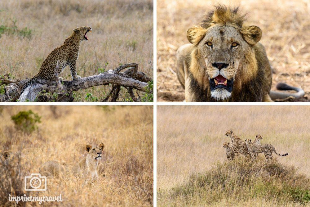 Tansania Safari Tipps Großkatzen