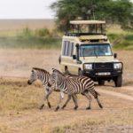 Meine persönlichen Tipps für eine Safari in Tansania