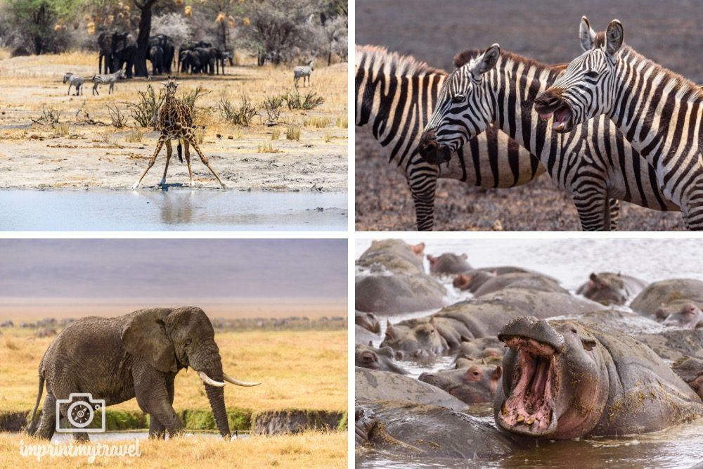 Tansania Safari Tipps Tierdichte