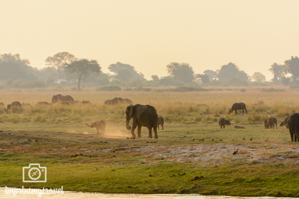 Die schönsten Nationalparks der Welt Chobe