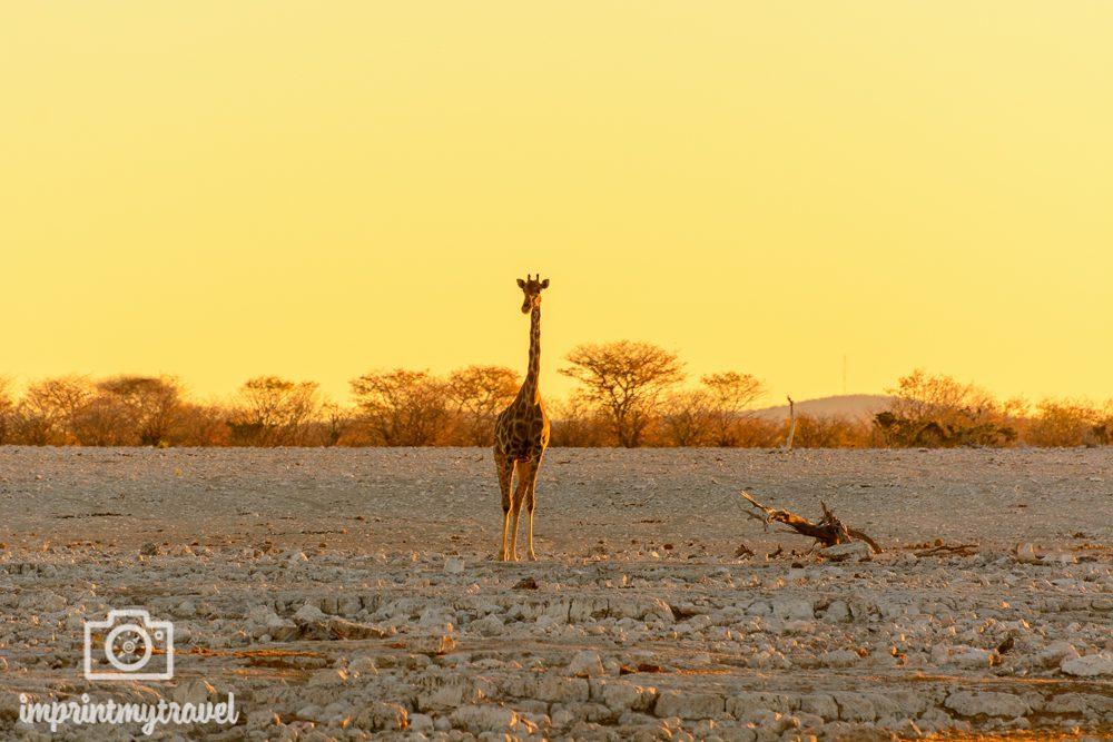 Traumorte dieser Welt Etosha Nationalpark