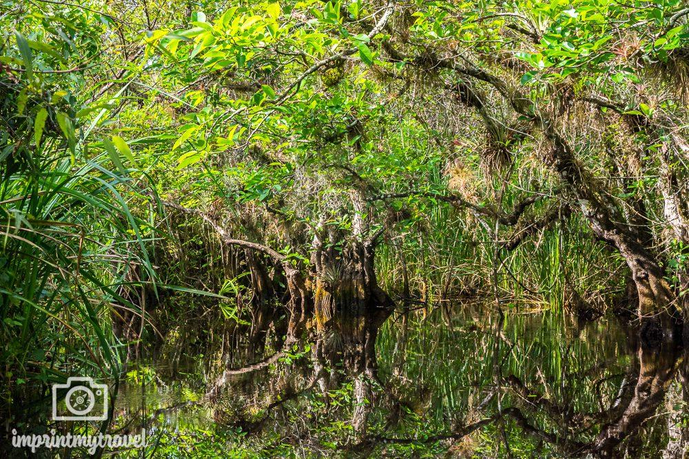 Die schönsten Schutzgebiete der Welt Everglades Nationalpark