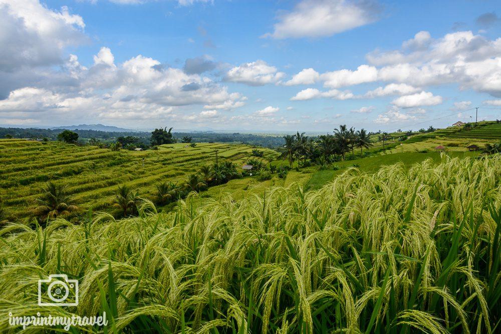 Die schönsten Orte der Welt Reisterrassen von Jatiluwih