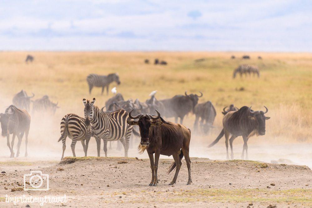 Die schönsten Plätze der Welt Ngorongoro Krater