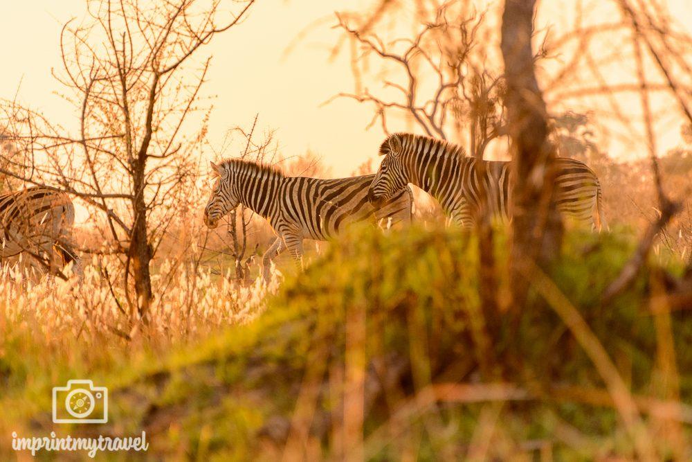 Die schönsten Orte der Welt Okavango Delta