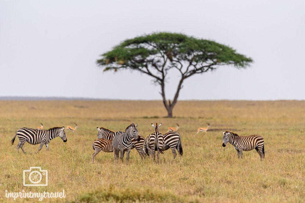 Die schönsten Orte der Welt Serengeti